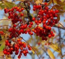 Herbstbild Foto: privat